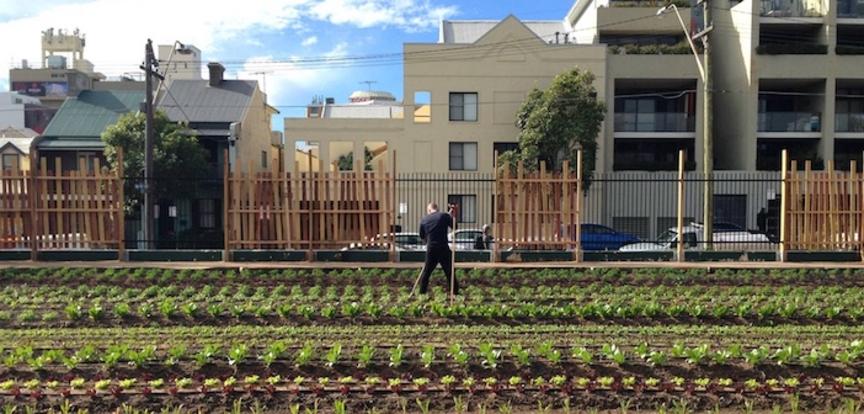 Promozione progetti agricoltura urbana / filiera verde