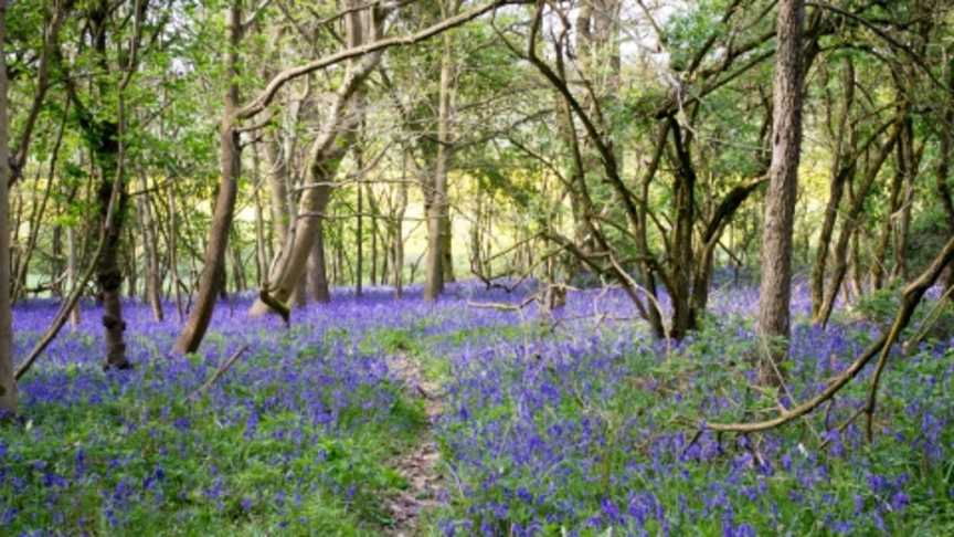 Plant more trees and support woodland management