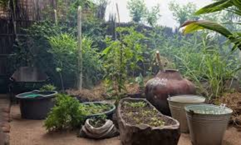 Pemaculture farming in Malawi