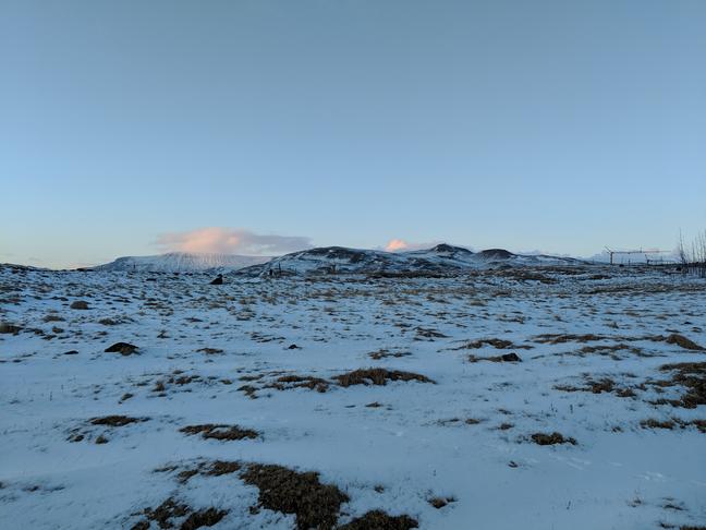 Fleiri tré við Reynisvatn