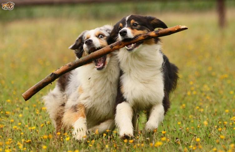 Lokað hundasvæði