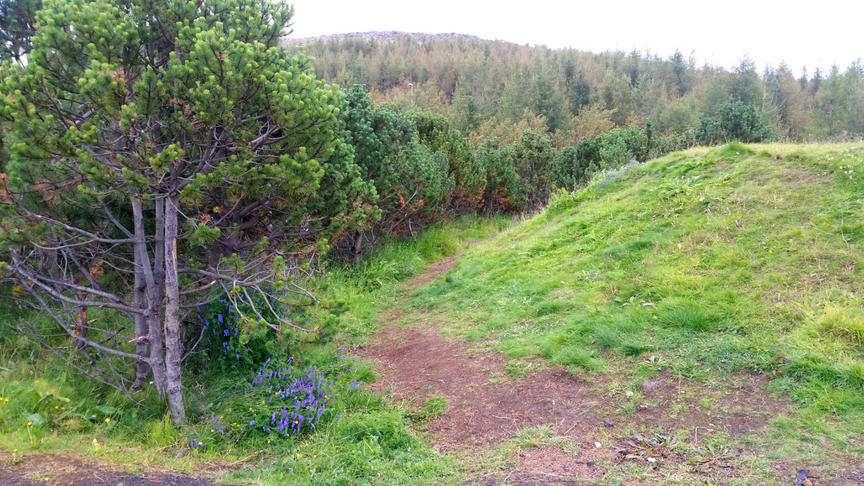 Hlúa að gróðri við Sæmundarskólann,