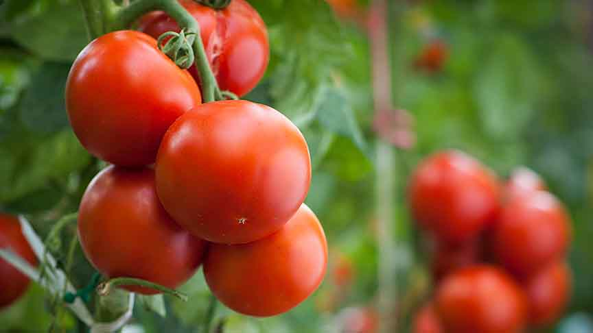 Transparency in the agricultural product chain