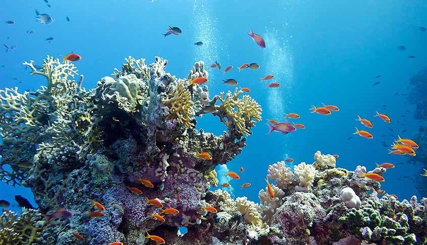 Protect Marine Environment