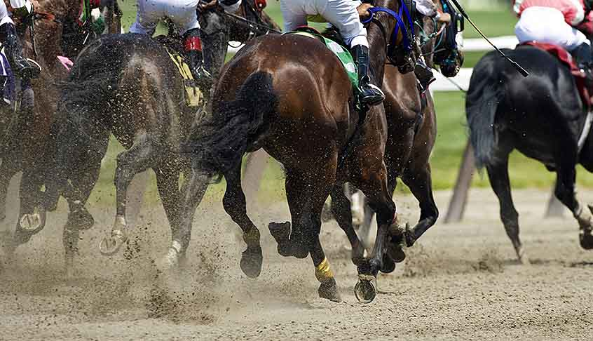 Improve Marsa horse race track