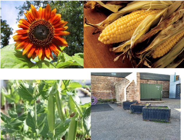 Broughton PC & Partners - Growing food £4,560 PART-FUNDED