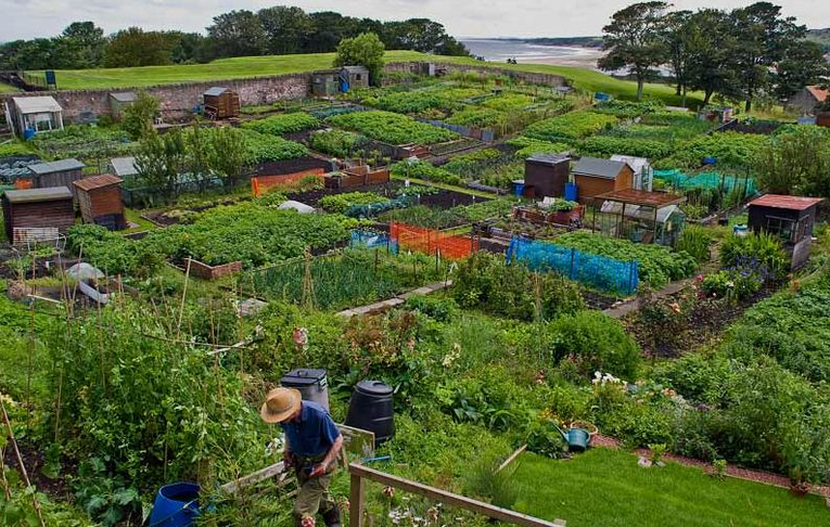 Allotments for agricultural use