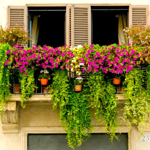 Balconies & Front Gardens