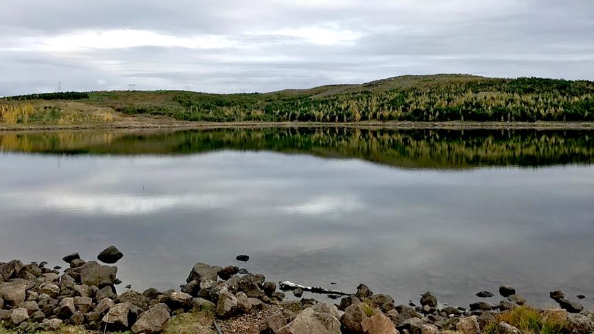 Gróðursetja tré allt í kringum Reynisvatn