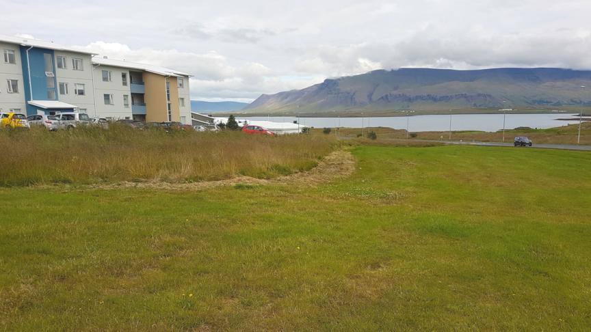 Planta trjám í Breiðuvík