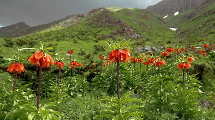Определение приоритетов  в Баткенской области