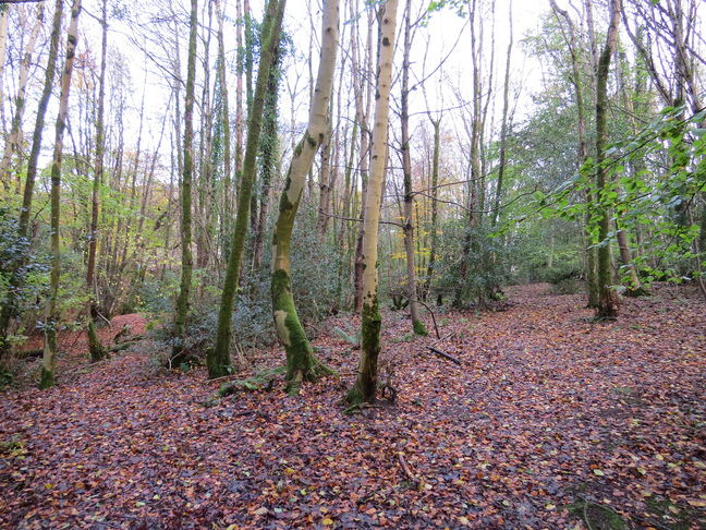Hunters Quay Woodland Walk