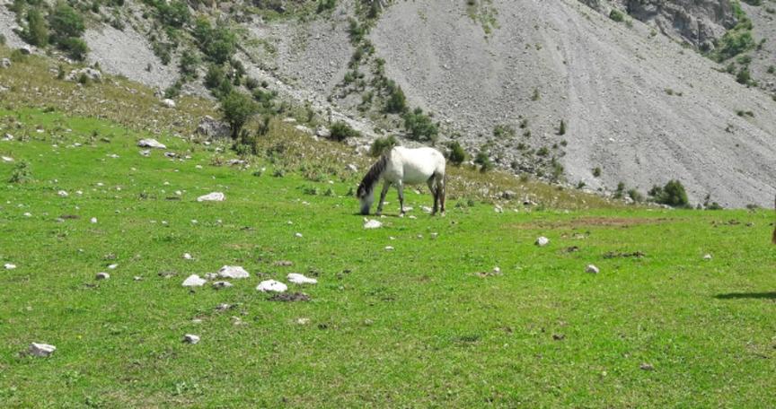 Джарадар