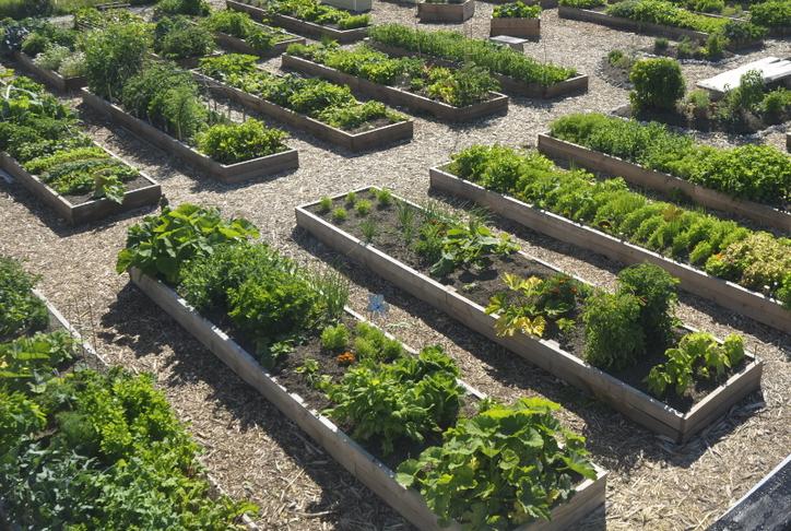 fjölskyldugarða, matjurtagarða  / communal garden plots