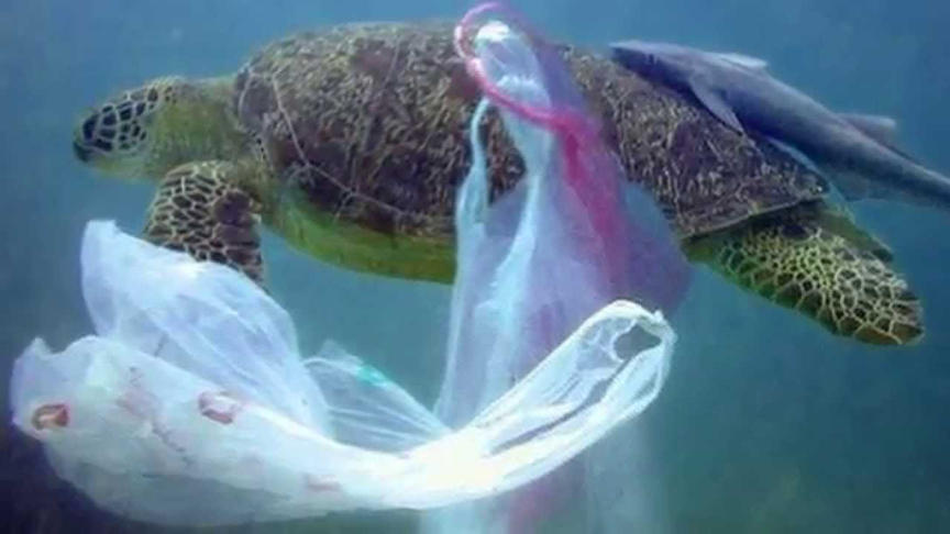 Banning of Plastic Bags
