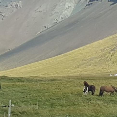 Göngu- og reiðstígar í  Esjuhlíðum