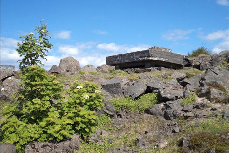 Hundadagur í Öskjuhlíð
