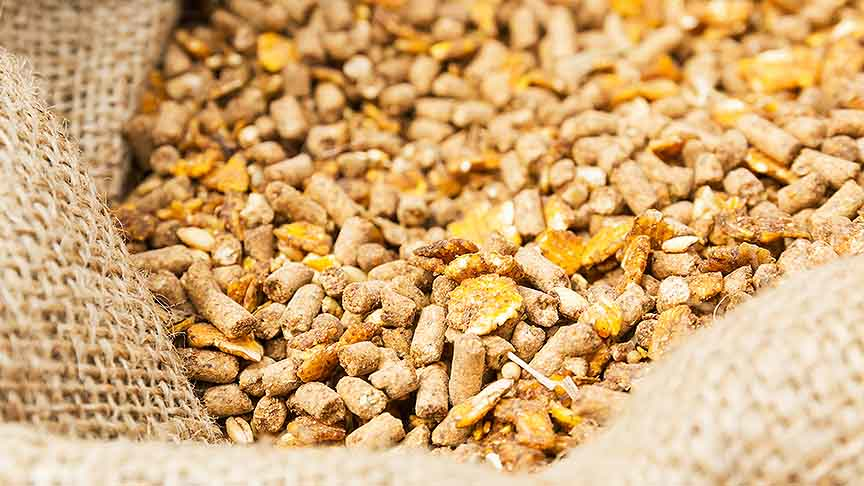 Study the problems associated with animal feed prices