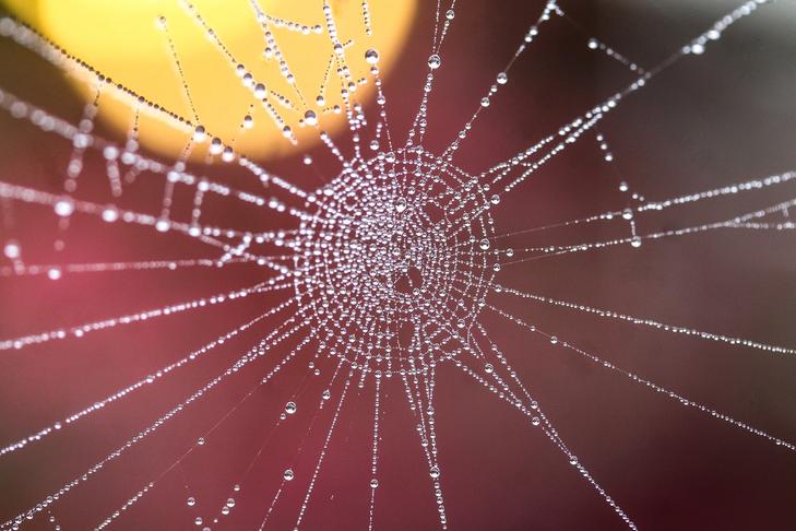 Universelle, transparente, modulare Aus- & Weiterbildung
