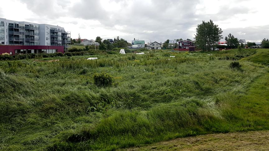 Matjurtagarður Þorragötu
