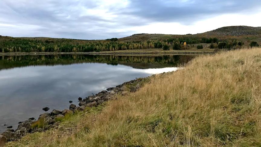 Auka fuglalíf við Reynisvatn.